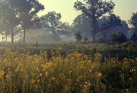 summer morning, Ojibway Prairie Provincial Nature Reserve. photo by Karen Cedar